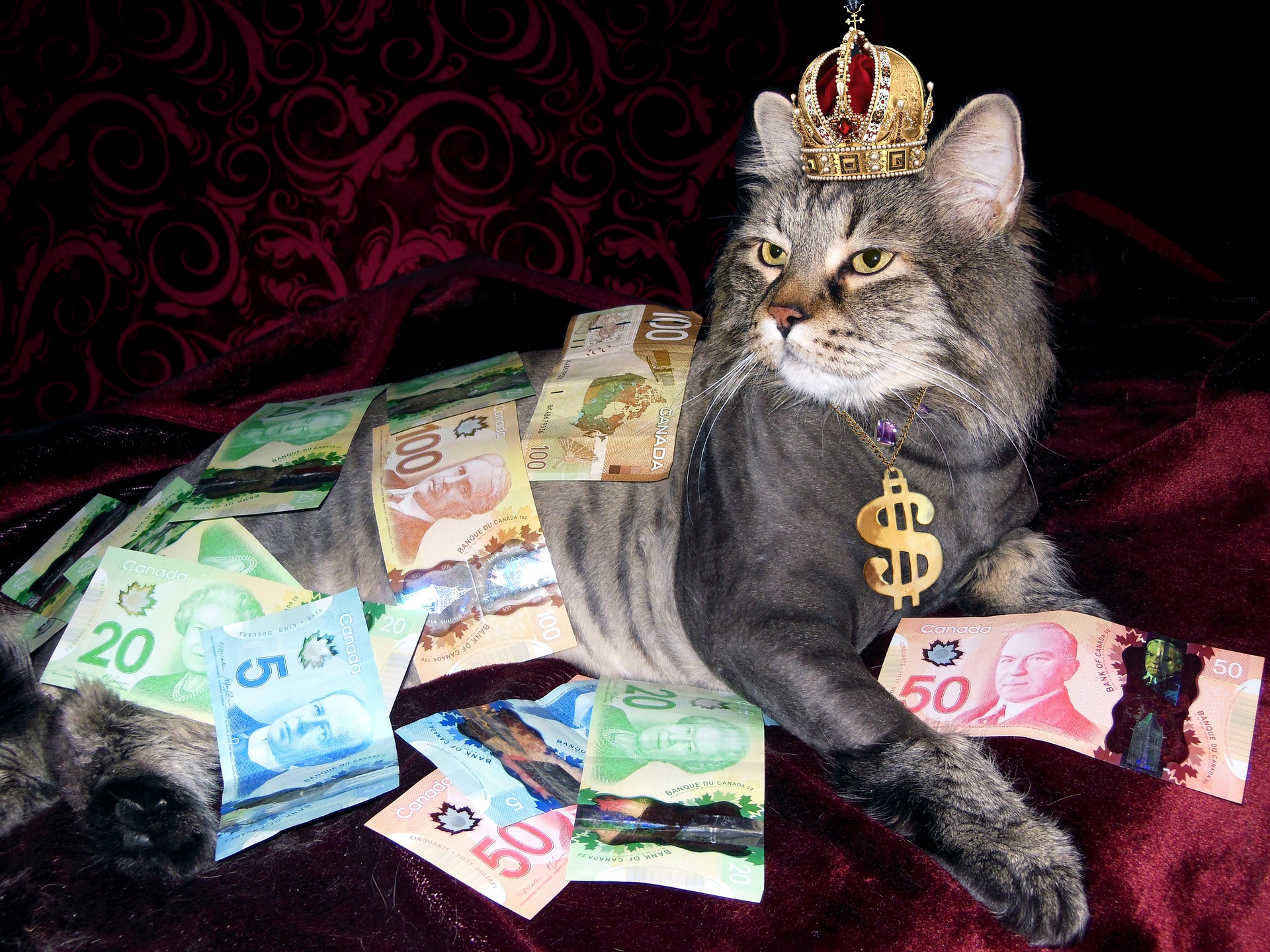cat with crown and dollar necklace covered in canadian money