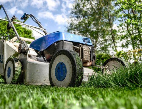 Lawn…the Unproductive Crop