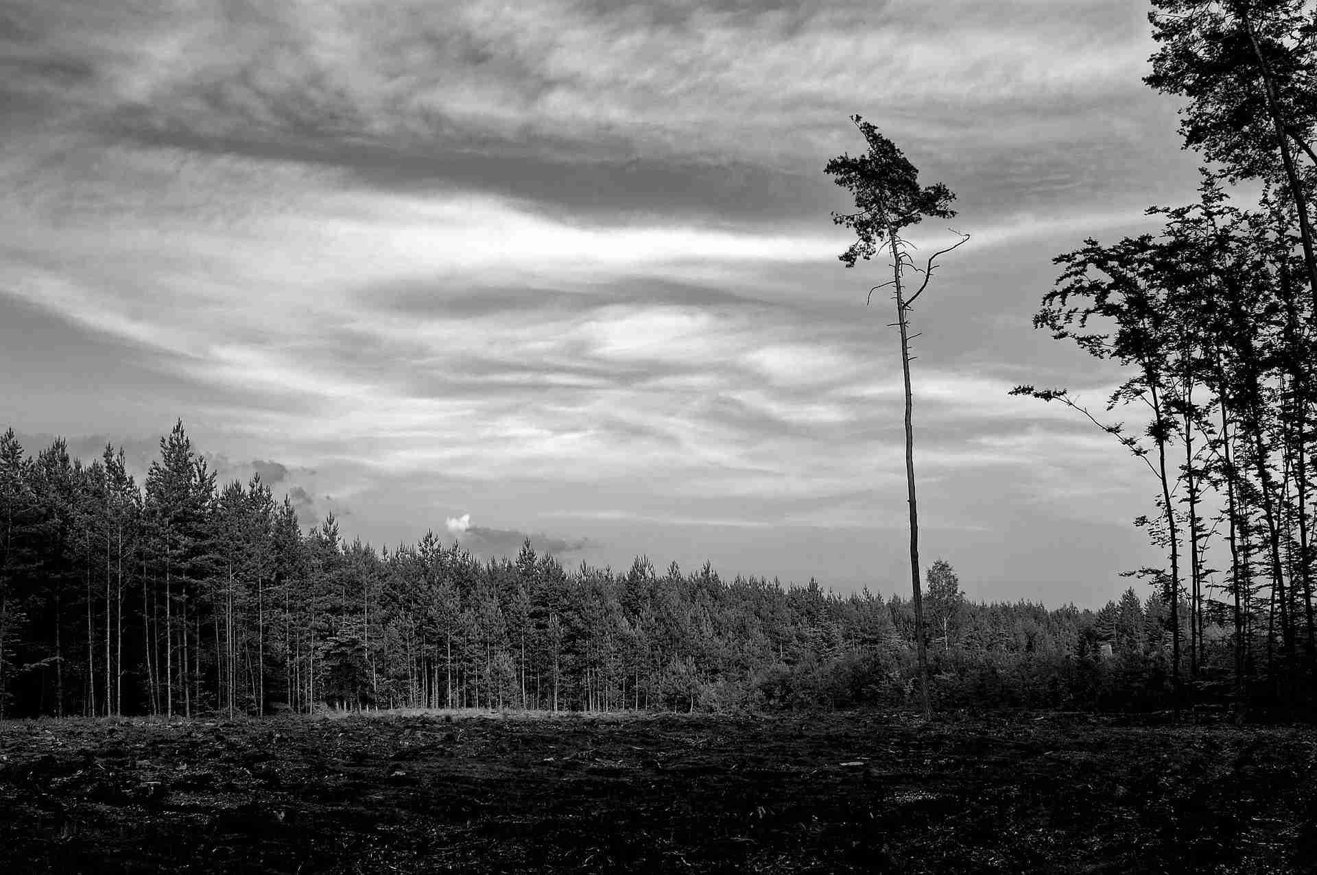 desolation clear cut forest peachland bc