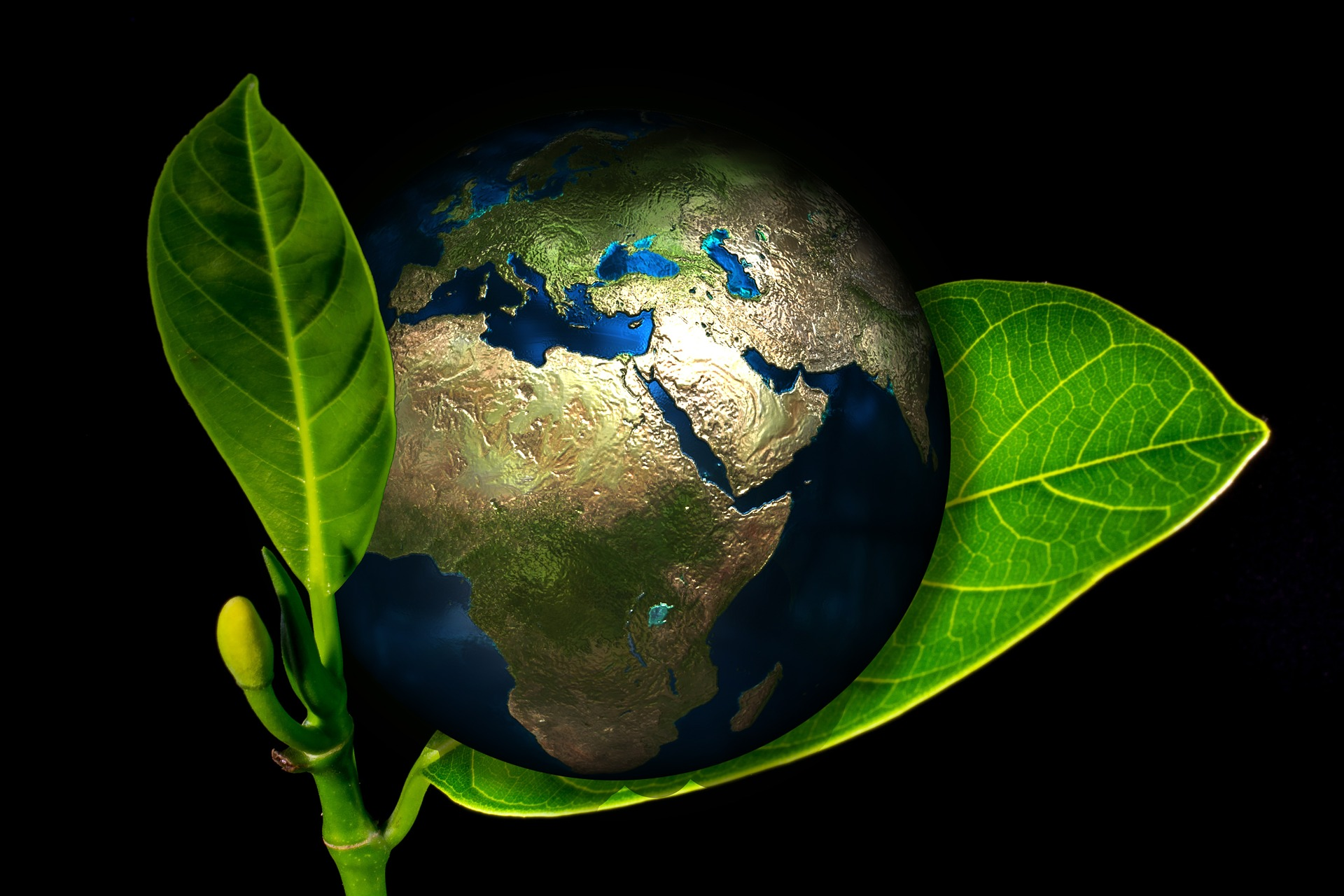 photo of earth held by green leaf